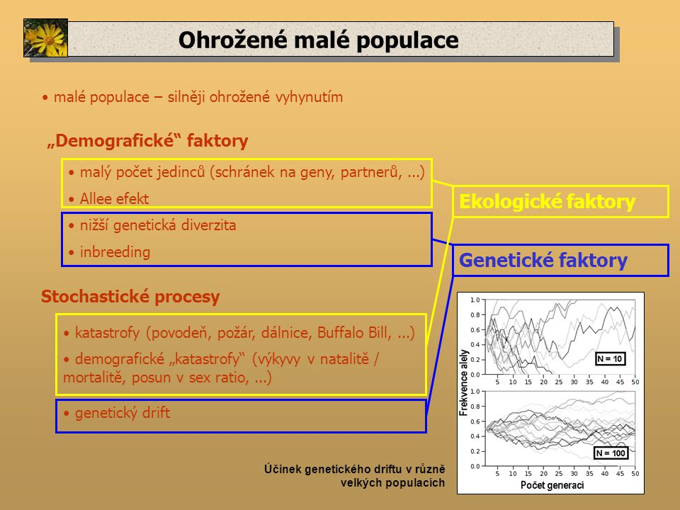 """Ohrožené malé populace """"Demografické faktory malý počet jedinců (schránek na geny, partnerů,...) Stochastické procesy malé populace – silněji ohrožené vyhynutím Allee efekt katastrofy (povodeň, požár, dálnice, Buffalo Bill,...) demografické """"katastrofy (výkyvy v natalitě / mortalitě, posun v sex ratio,...) nižší genetická diverzita inbreeding Účinek genetického driftu v různě velkých populacích genetický drift Genetické faktory Ekologické faktory"""
