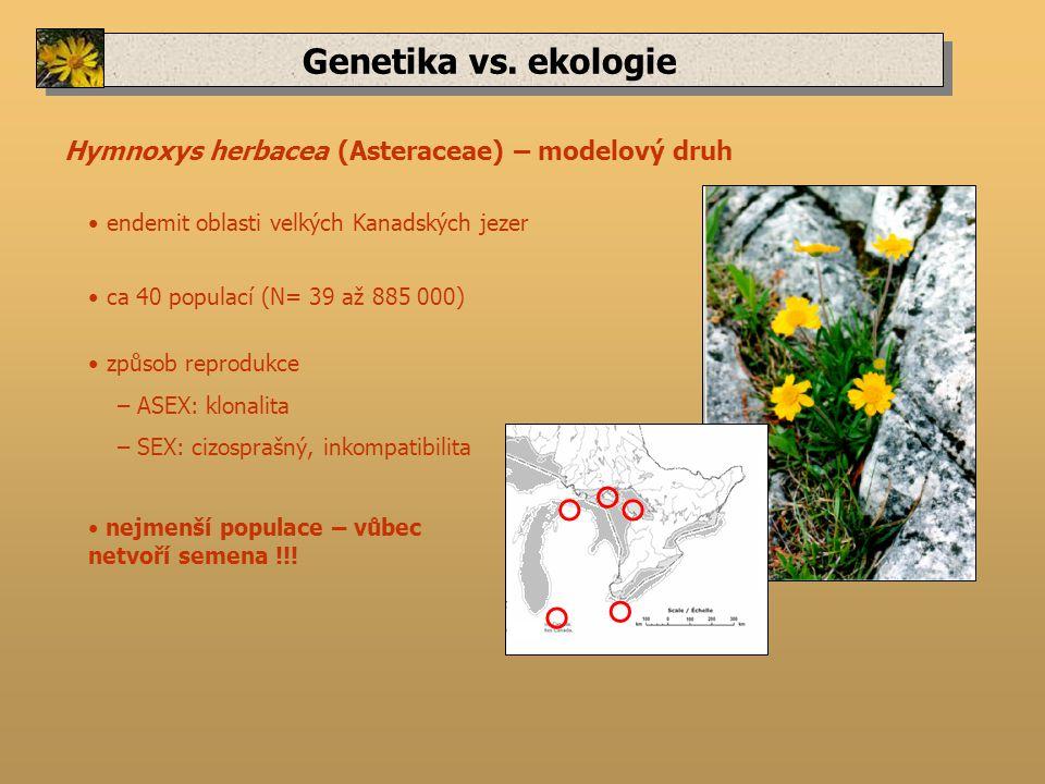 Genetika vs. ekologie Hymnoxys herbacea (Asteraceae) – modelový druh ca 40 populací (N= 39 až 885 000) nejmenší populace – vůbec netvoří semena !!! en