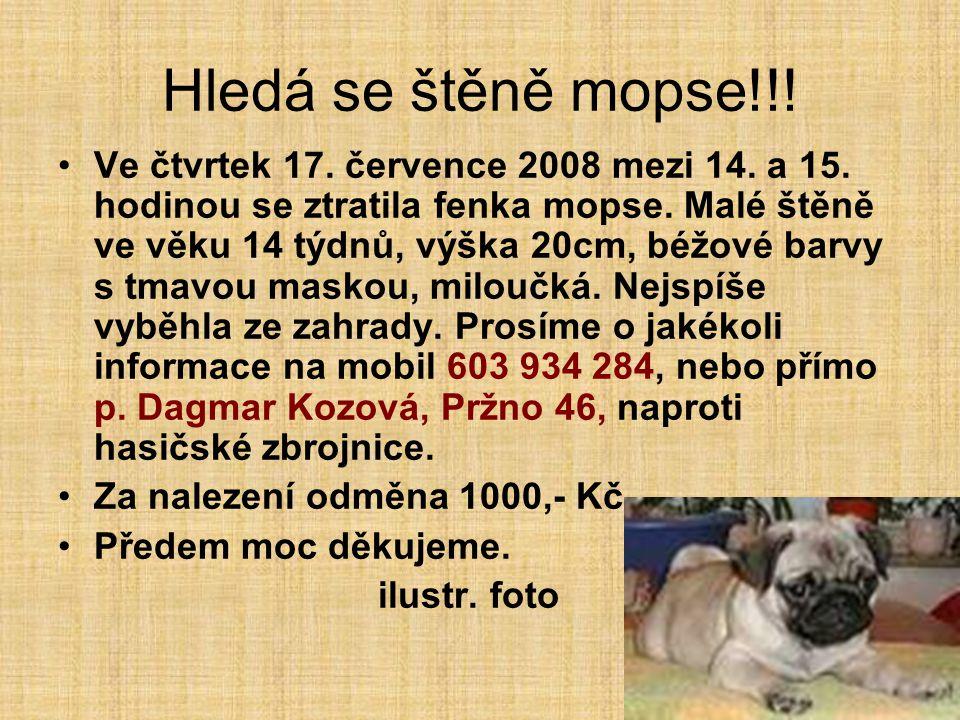 Hledá se štěně mopse!!! Ve čtvrtek 17. července 2008 mezi 14. a 15. hodinou se ztratila fenka mopse. Malé štěně ve věku 14 týdnů, výška 20cm, béžové b