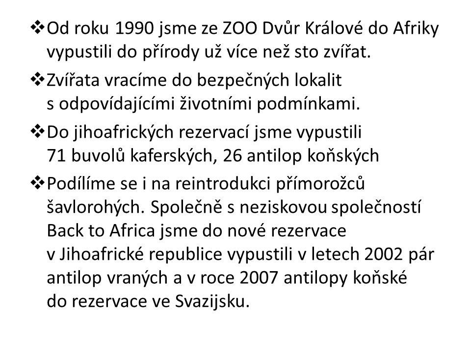  Od roku 1990 jsme ze ZOO Dvůr Králové do Afriky vypustili do přírody už více než sto zvířat.