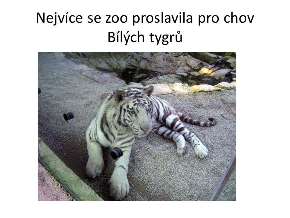 Nejvíce se zoo proslavila pro chov Bílých tygrů