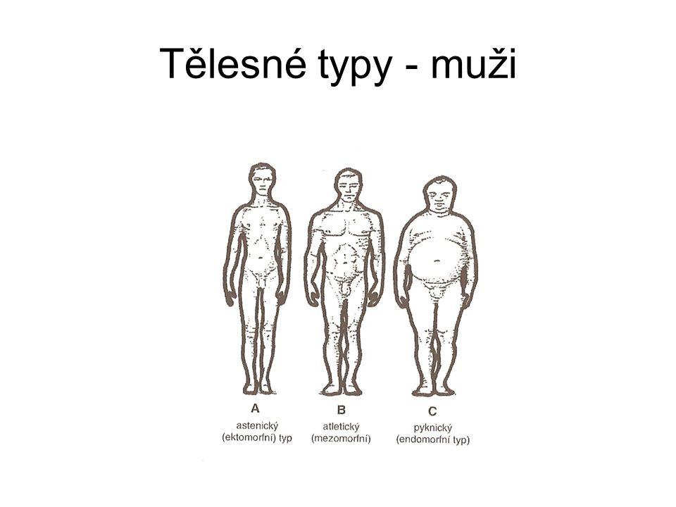 Tělesné typy - muži