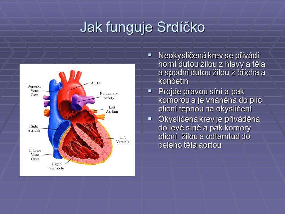 Jak funguje Srdíčko  Neokysličená krev se přivádí horní dutou žilou z hlavy a těla a spodní dutou žilou z břicha a končetin  Projde pravou síní a pa