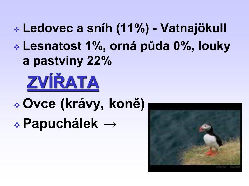  Ledovec a sníh (11%) - Vatnajökull  Lesnatost 1%, orná půda 0%, louky a pastviny 22% ZVÍŘATA  Ovce (krávy, koně)  Papuchálek →