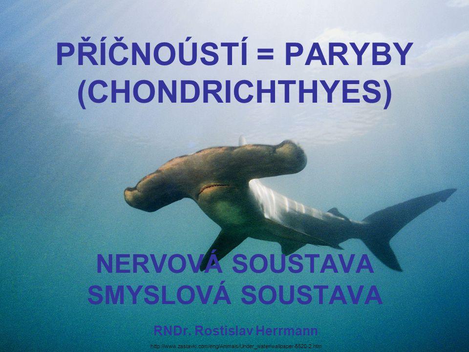 PŘÍČNOÚSTÍ = PARYBY (CHONDRICHTHYES) NERVOVÁ SOUSTAVA SMYSLOVÁ SOUSTAVA RNDr. Rostislav Herrmann http://www.zastavki.com/eng/Animals/Under_water/wallp