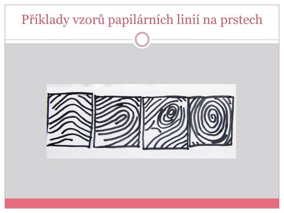 Příklady vzorů papilárních linií na prstech