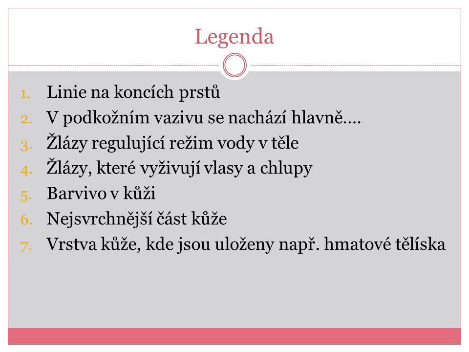 Legenda 1. Linie na koncích prstů 2. V podkožním vazivu se nachází hlavně….