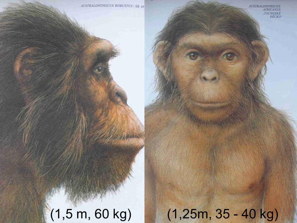 (1,25m, 35 - 40 kg) (1,5 m, 60 kg)
