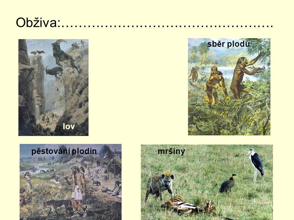 Obživa:…………………………………………. lov sběr plodů pěstování plodin mršiny
