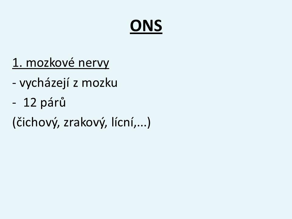 ONS 1. mozkové nervy - vycházejí z mozku -12 párů (čichový, zrakový, lícní,...)