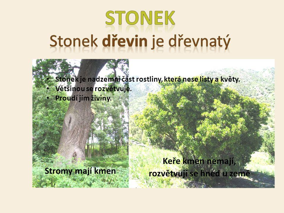 Keře kmen nemají, rozvětvují se hned u země Stromy mají kmen Stonek je nadzemní část rostliny, která nese listy a květy. Většinou se rozvětvuje. Proud