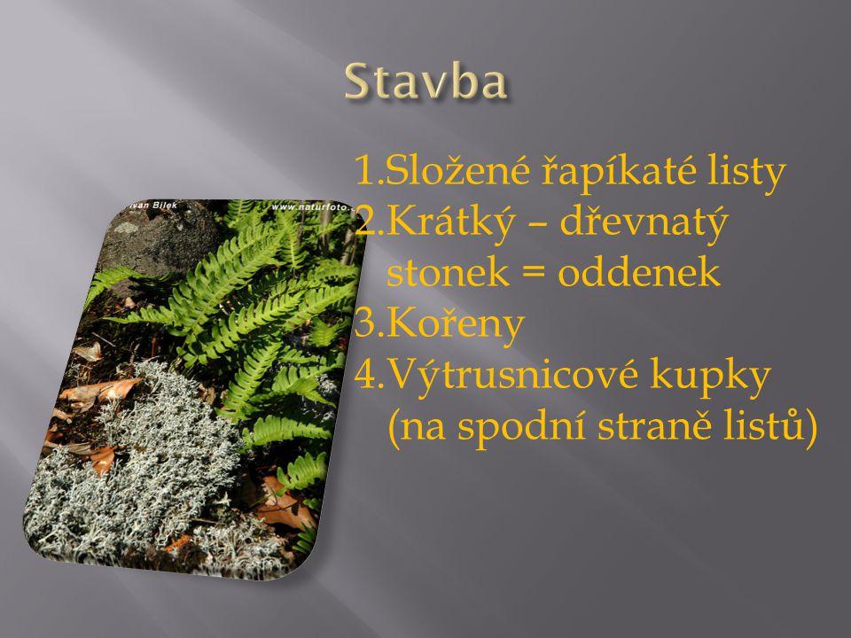 1.Složené řapíkaté listy 2.Krátký – dřevnatý stonek = oddenek 3.Kořeny 4.Výtrusnicové kupky (na spodní straně listů)