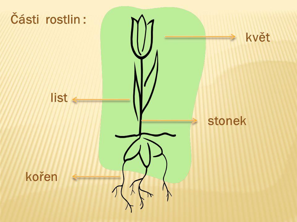 květ list stonek kořen Části rostlin :