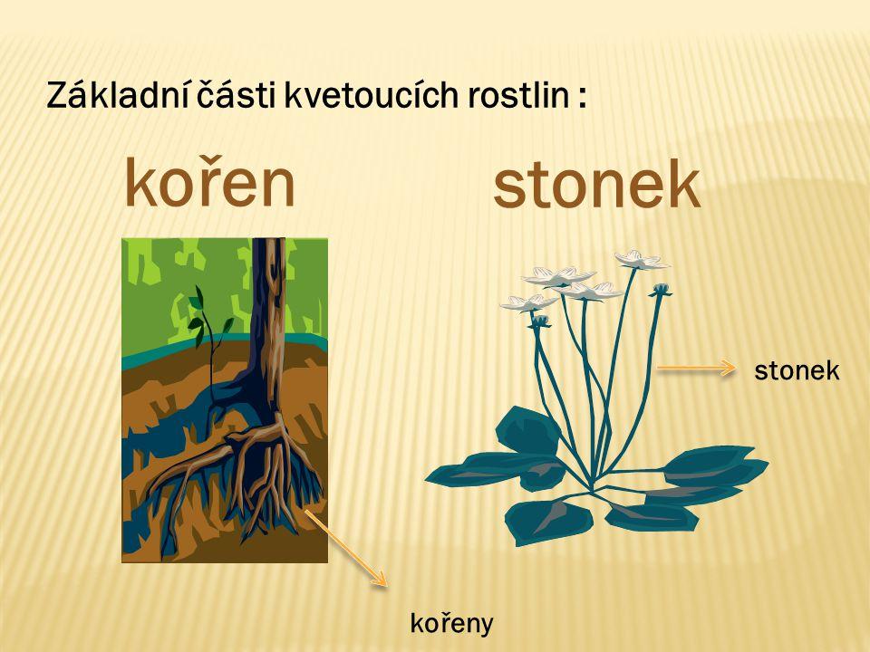 Základní části kvetoucích rostlin : kořen stonek kořeny