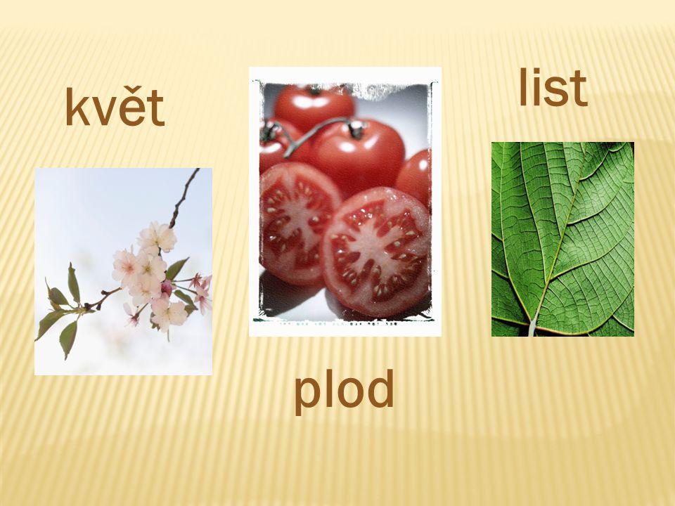 plod květ list