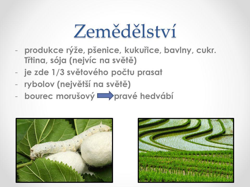 Zemědělství - produkce rýže, pšenice, kukuřice, bavlny, cukr.