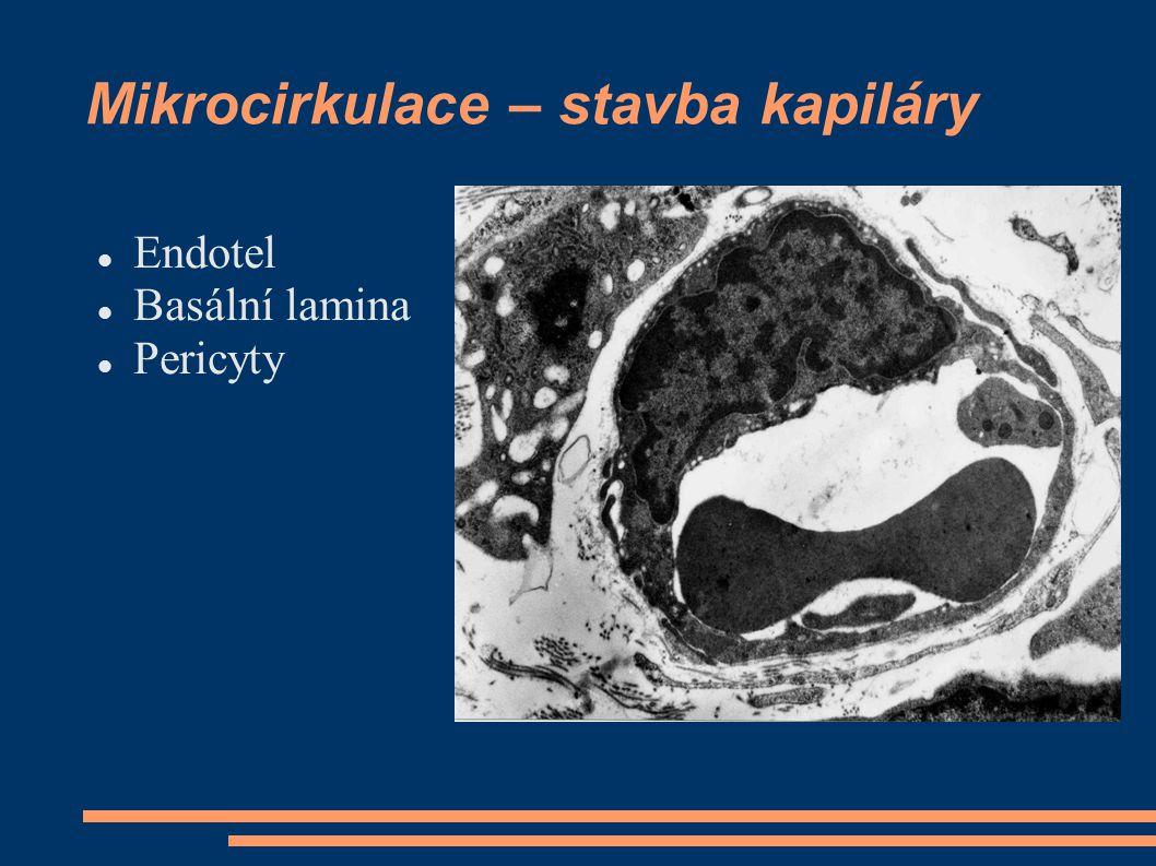 Mikrocirkulace – stavba kapiláry Endotel Basální lamina Pericyty