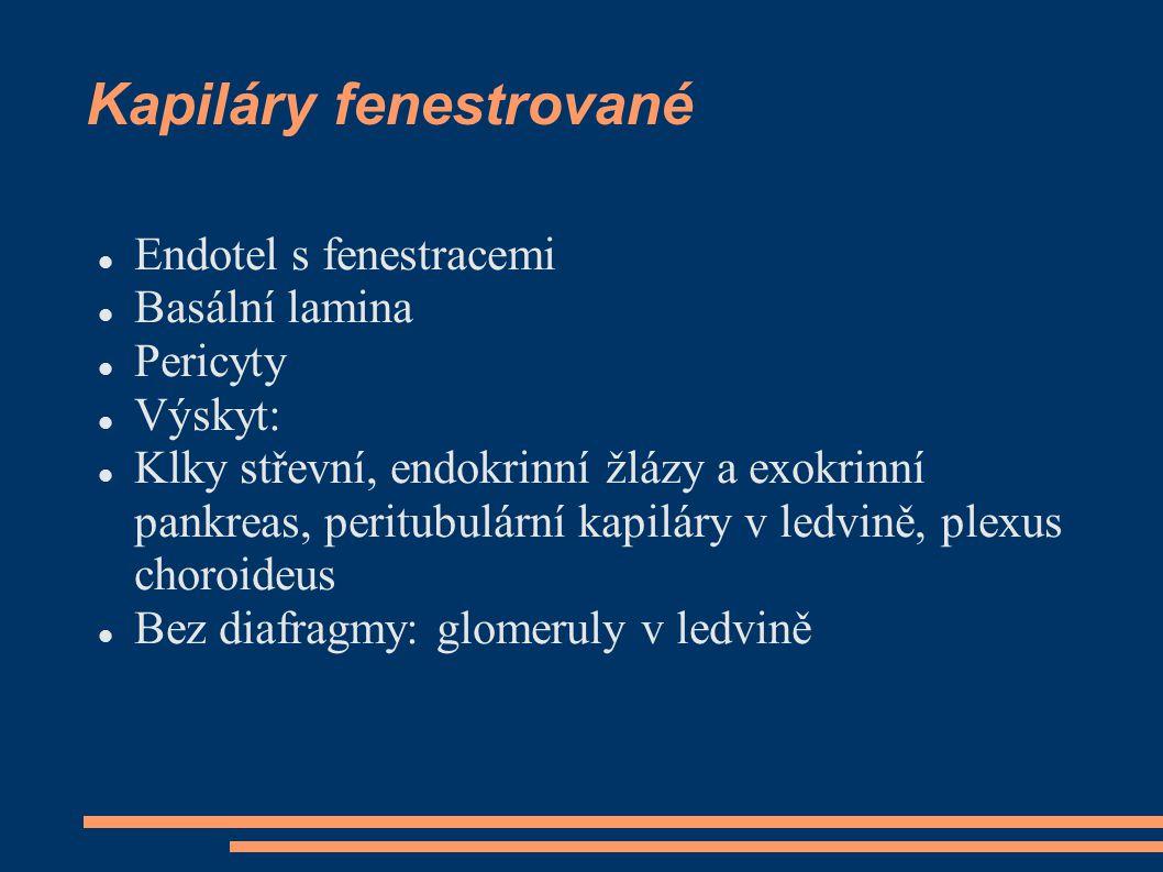 Kapiláry fenestrované Endotel s fenestracemi Basální lamina Pericyty Výskyt: Klky střevní, endokrinní žlázy a exokrinní pankreas, peritubulární kapilá