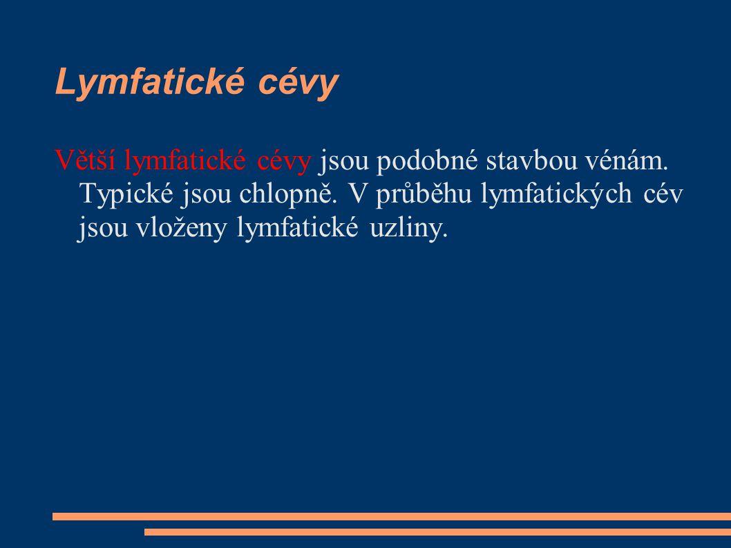 Lymfatické cévy Větší lymfatické cévy jsou podobné stavbou vénám. Typické jsou chlopně. V průběhu lymfatických cév jsou vloženy lymfatické uzliny.
