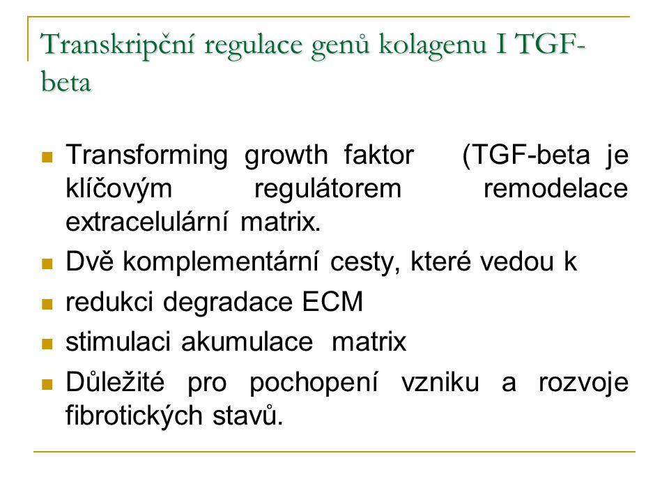 Transkripční regulace genů kolagenu I TGF- beta Transforming growth faktor (TGF-beta je klíčovým regulátorem remodelace extracelulární matrix. Dvě kom