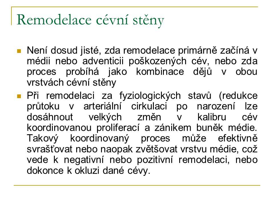 Remodelace cévní stěny Není dosud jisté, zda remodelace primárně začíná v médii nebo adventicii poškozených cév, nebo zda proces probíhá jako kombinac