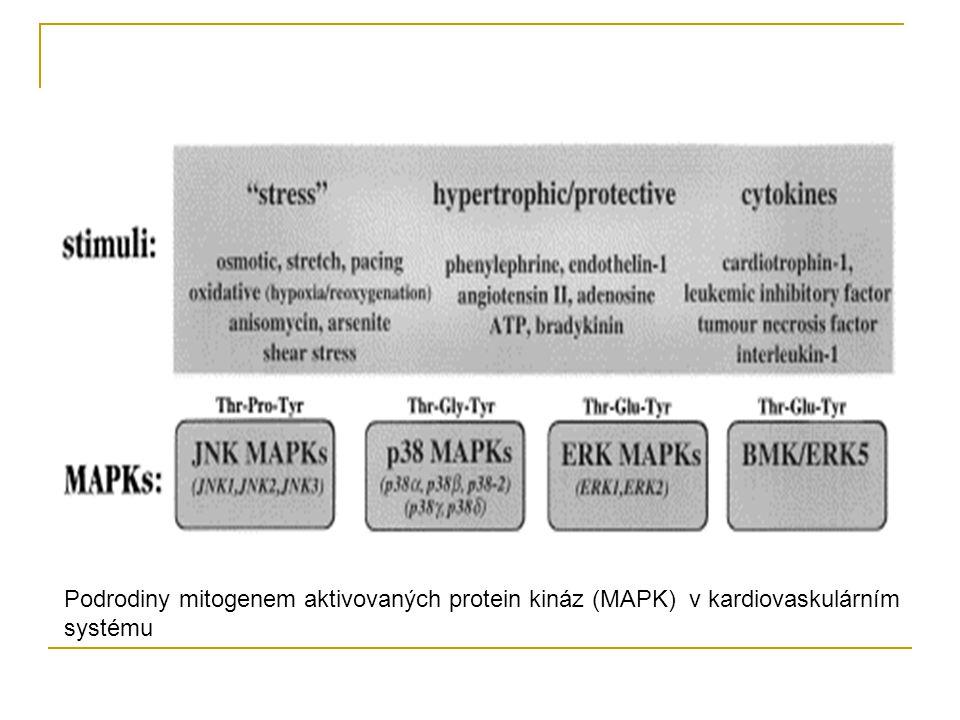 Podrodiny mitogenem aktivovaných protein kináz (MAPK) v kardiovaskulárním systému