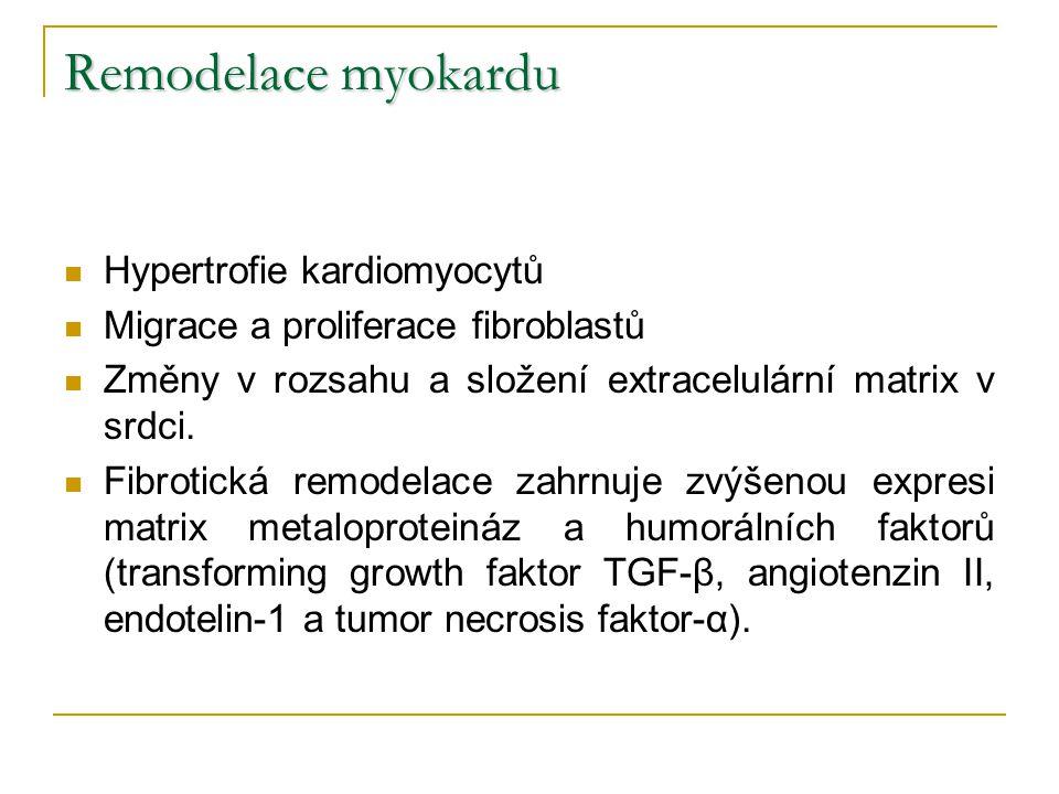 Remodelace myokardu Hypertrofie kardiomyocytů Migrace a proliferace fibroblastů Změny v rozsahu a složení extracelulární matrix v srdci. Fibrotická re