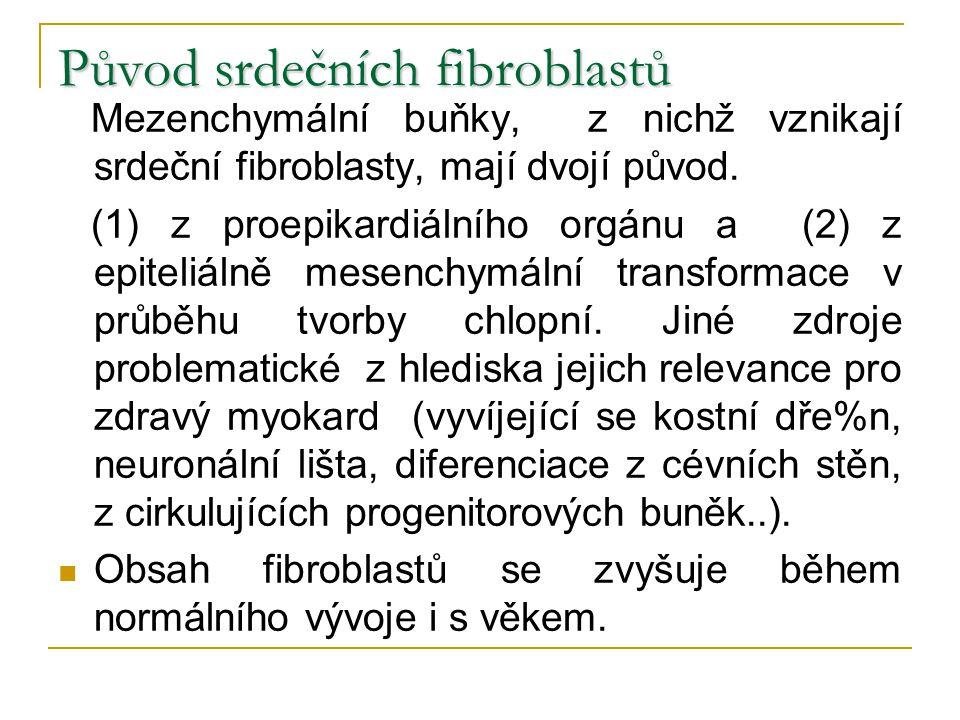Původ srdečních fibroblastů Mezenchymální buňky, z nichž vznikají srdeční fibroblasty, mají dvojí původ. (1) z proepikardiálního orgánu a (2) z epitel