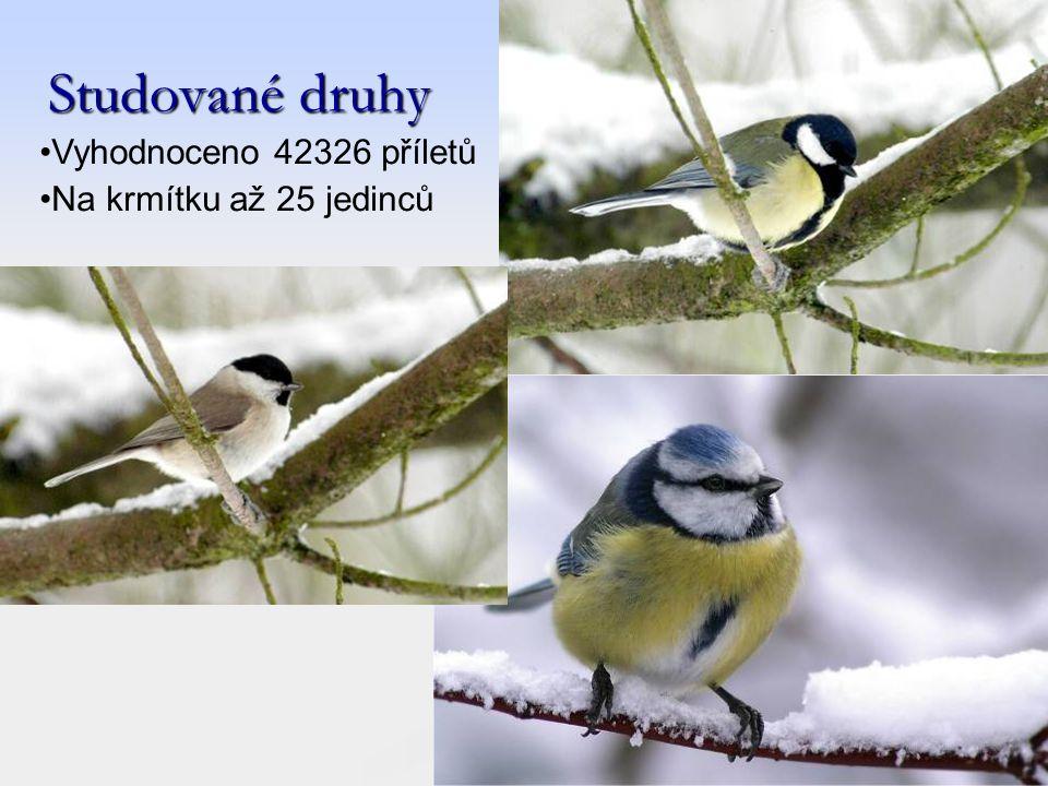 Studované druhy Vyhodnoceno 42326 příletů Na krmítku až 25 jedinců
