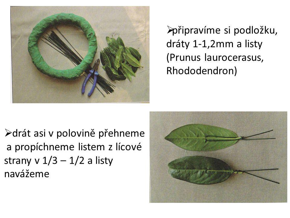  připravíme si podložku, dráty 1-1,2mm a listy (Prunus laurocerasus, Rhododendron)  drát asi v polovině přehneme a propíchneme listem z lícové stran