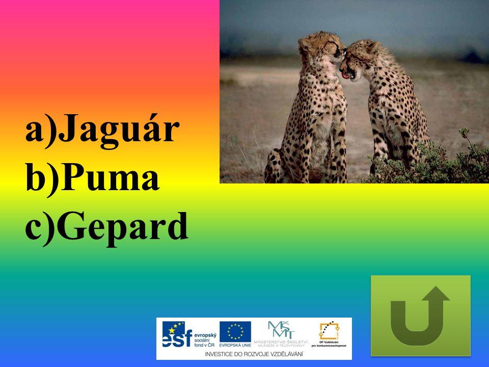 a)Jaguár b)Puma c)Gepard