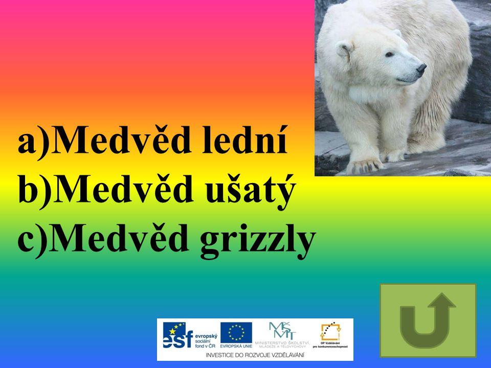 a)Medvěd lední b)Medvěd ušatý c)Medvěd grizzly