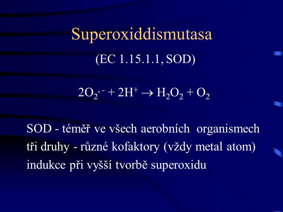 Superoxiddismutasa (EC 1.15.1.1, SOD) 2O 2. - + 2H +  H2O2 H2O2 + O2O2 SOD - téměř ve všech aerobních organismech tři druhy - různé kofaktory (vždy m