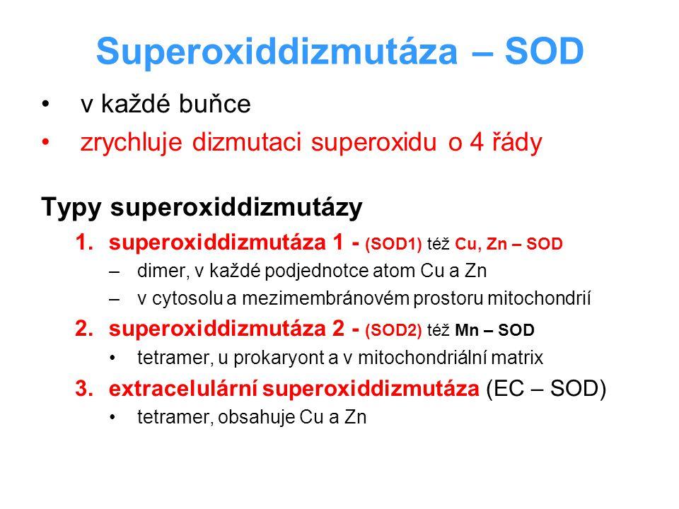 Superoxiddizmutáza – SOD v každé buňce zrychluje dizmutaci superoxidu o 4 řády Typy superoxiddizmutázy 1.superoxiddizmutáza 1 - (SOD1) též Cu, Zn – SO