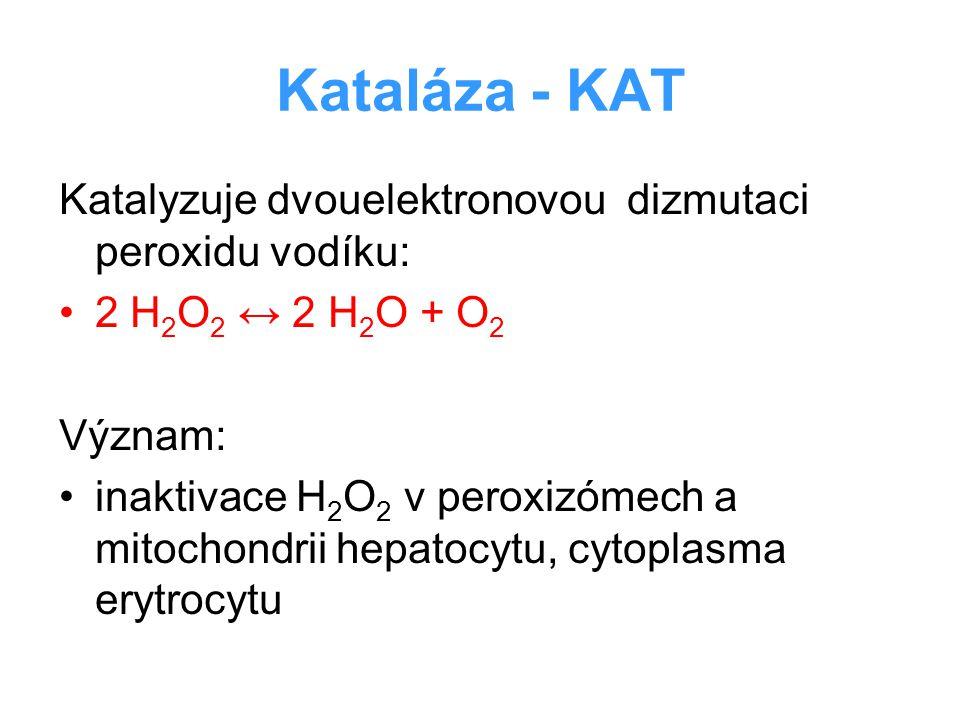 Kataláza - KAT Katalyzuje dvouelektronovou dizmutaci peroxidu vodíku: 2 H 2 O 2 ↔ 2 H 2 O + O 2 Význam: inaktivace H 2 O 2 v peroxizómech a mitochondr