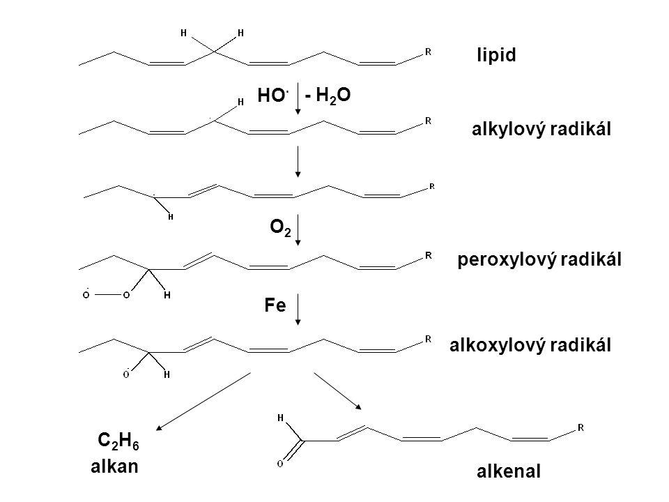 HO · - H 2 O O2O2 Fe C2H6C2H6 lipid alkylový radikál peroxylový radikál alkoxylový radikál alkenal alkan