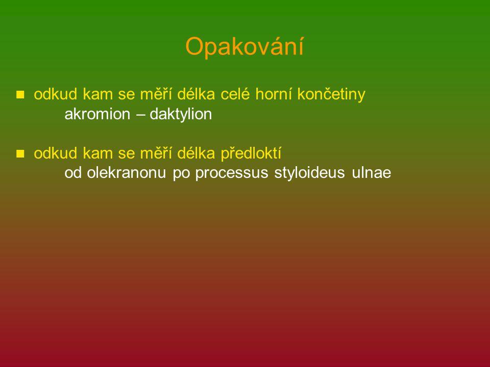 Opakování odkud kam se měří délka celé horní končetiny akromion – daktylion odkud kam se měří délka předloktí od olekranonu po processus styloideus ulnae