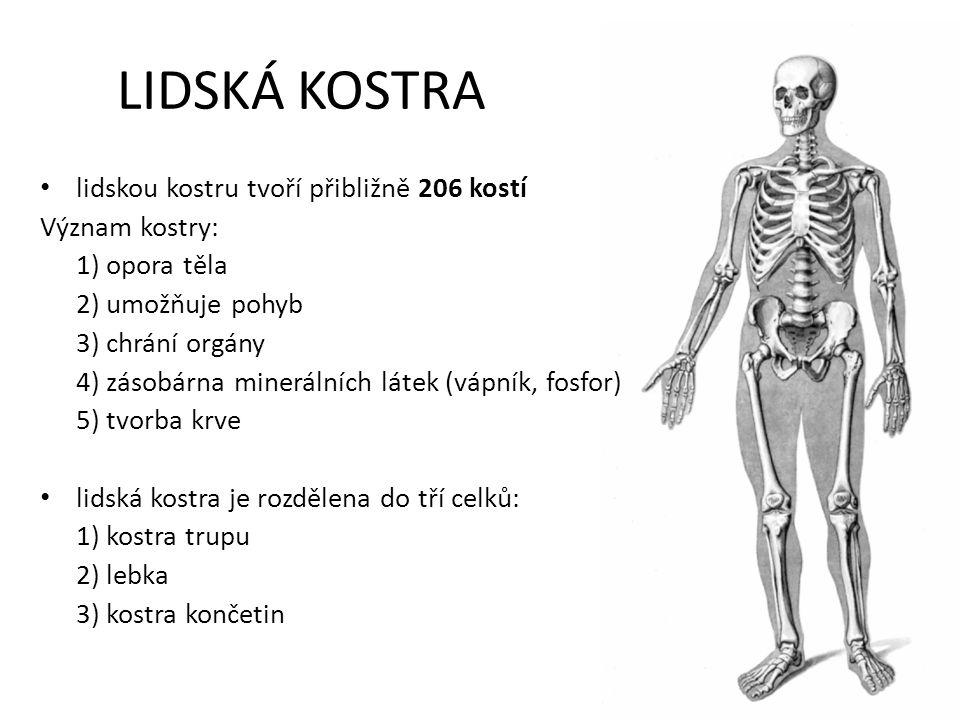 LIDSKÁ KOSTRA lidskou kostru tvoří přibližně 206 kostí Význam kostry: 1) opora těla 2) umožňuje pohyb 3) chrání orgány 4) zásobárna minerálních látek