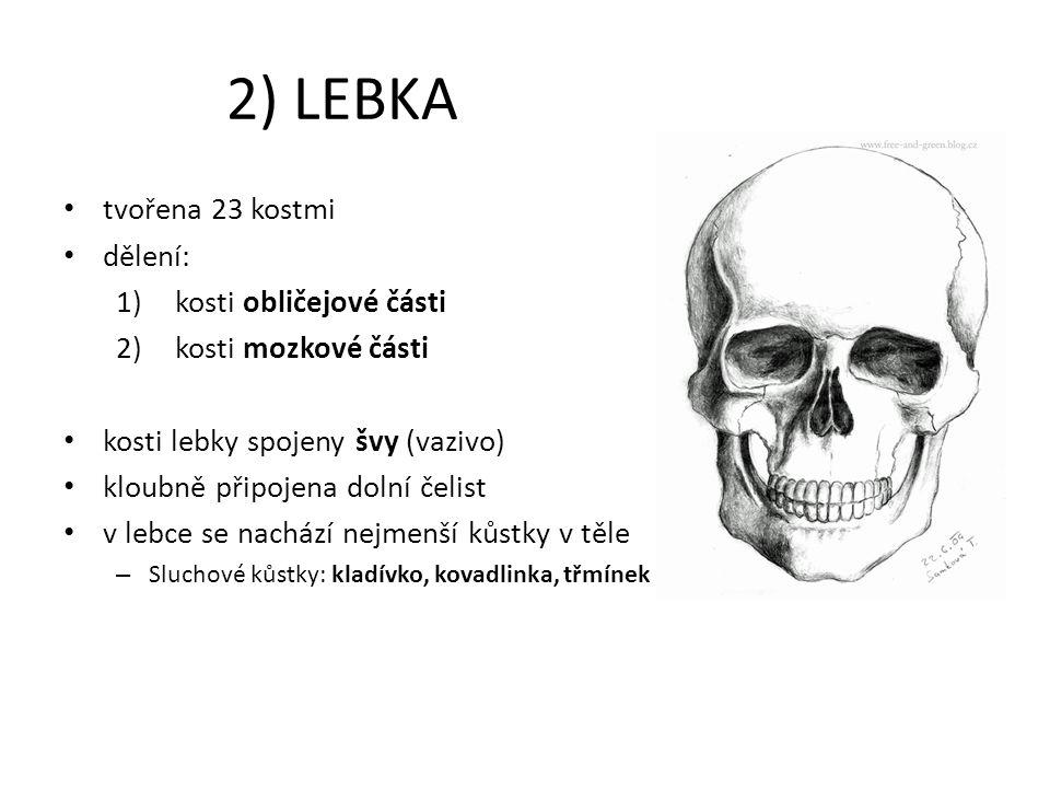 2) LEBKA tvořena 23 kostmi dělení: 1)kosti obličejové části 2)kosti mozkové části kosti lebky spojeny švy (vazivo) kloubně připojena dolní čelist v le
