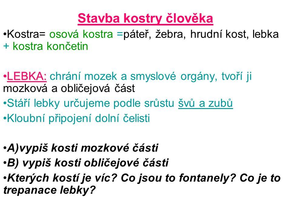 Stavba kostry člověka Kostra= osová kostra =páteř, žebra, hrudní kost, lebka + kostra končetin LEBKA:LEBKA: chrání mozek a smyslové orgány, tvoří ji m