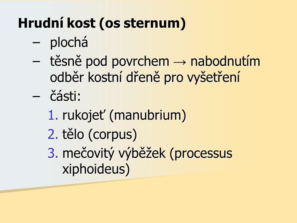 Hrudní kost (os sternum) –plochá –těsně pod povrchem → nabodnutím odběr kostní dřeně pro vyšetření –části: 1.rukojeť (manubrium) 2.tělo (corpus) 3.meč