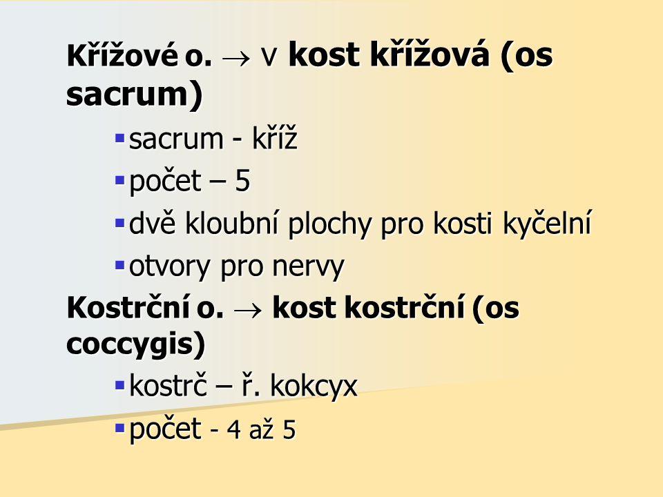 Křížové o.  v kost křížová (os sacrum)  sacrum - kříž  počet – 5  dvě kloubní plochy pro kosti kyčelní  otvory pro nervy Kostrční o.  kost kostr