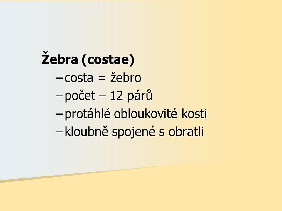 Žebra (costae) –costa = žebro –počet – 12 párů –protáhlé obloukovité kosti –kloubně spojené s obratli