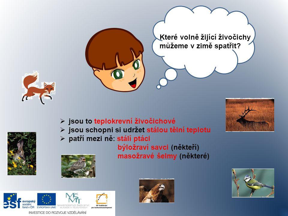 Zdroje Stopy zvířat, živočichů.Předškoláci [online].