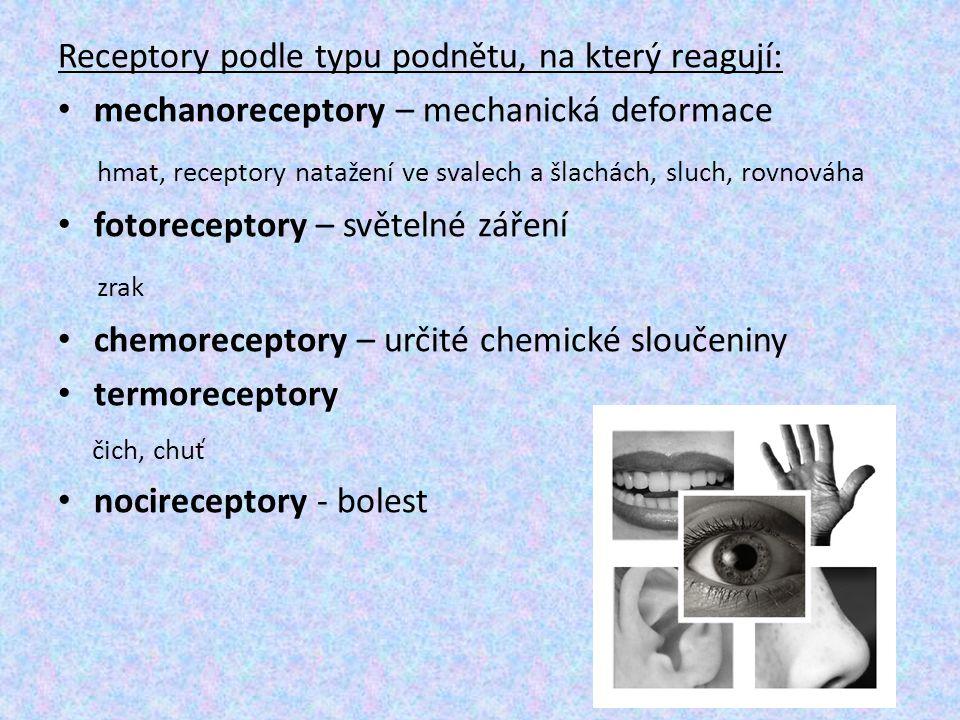 Receptory podle typu podnětu, na který reagují: mechanoreceptory – mechanická deformace hmat, receptory natažení ve svalech a šlachách, sluch, rovnová