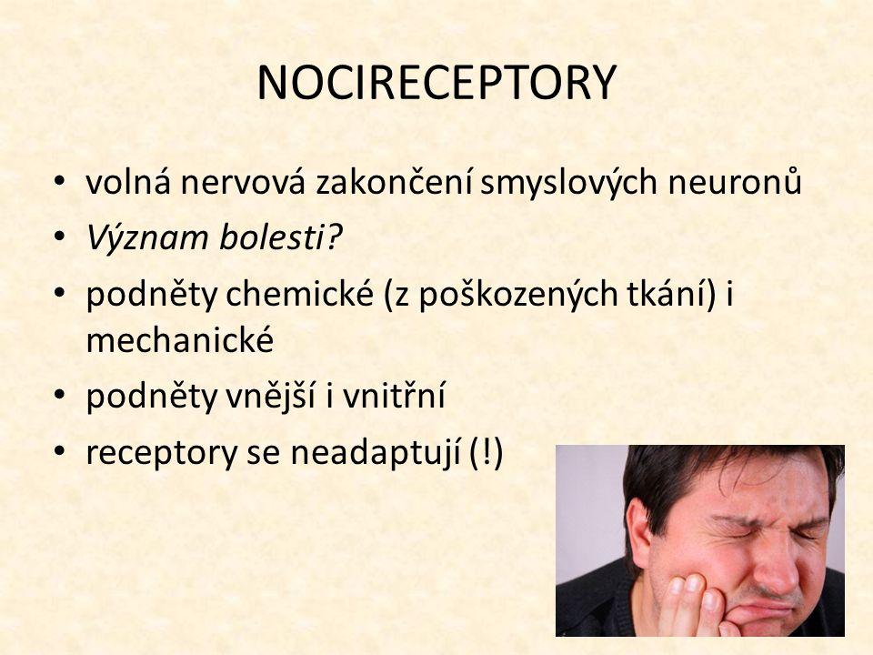 NOCIRECEPTORY volná nervová zakončení smyslových neuronů Význam bolesti? podněty chemické (z poškozených tkání) i mechanické podněty vnější i vnitřní