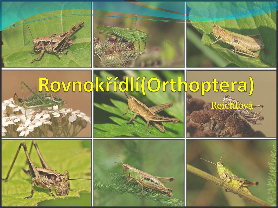 Krtonožka rozrývají půdu živí se hmyzem a jeho larvami škody na rostlinách poškozují kořínky při vyhrabávání zemních chodeb v ČR žije krtonožka obecná pokryta hustými chlupy má velké přední nohy