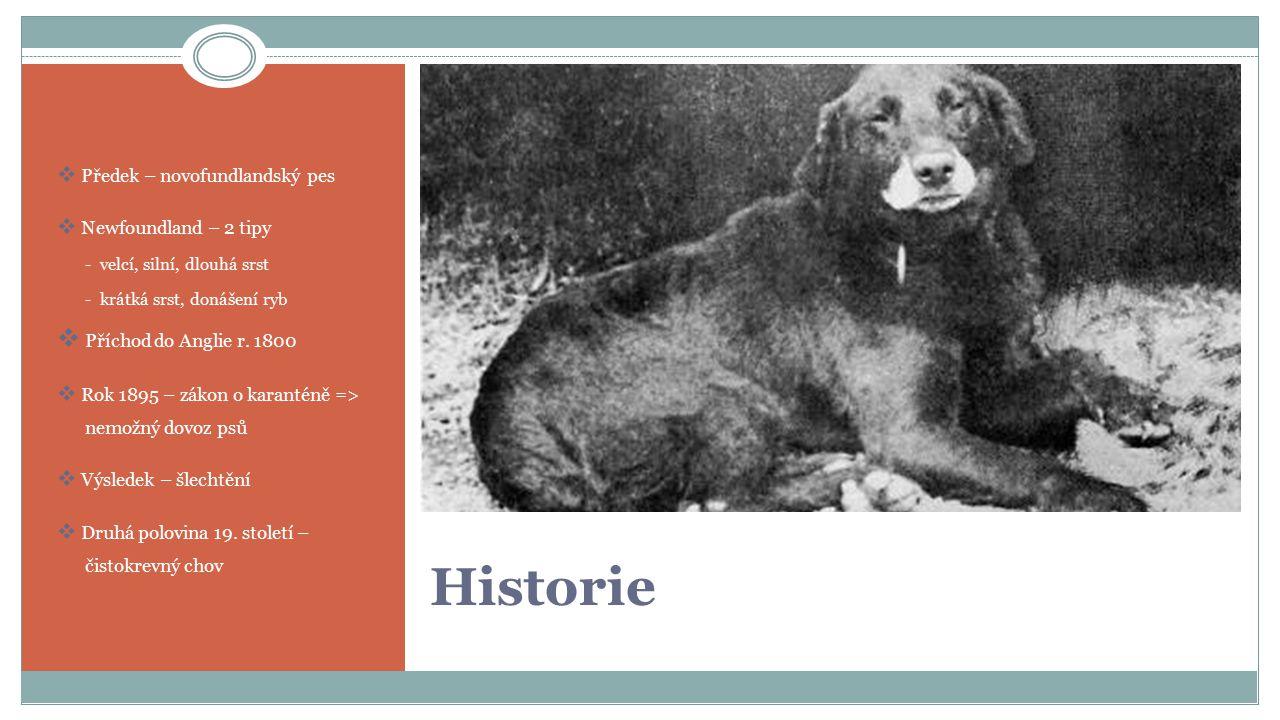 Historie  Předek – novofundlandský pes  Newfoundland – 2 tipy - velcí, silní, dlouhá srst - krátká srst, donášení ryb  P Příchod do Anglie r.