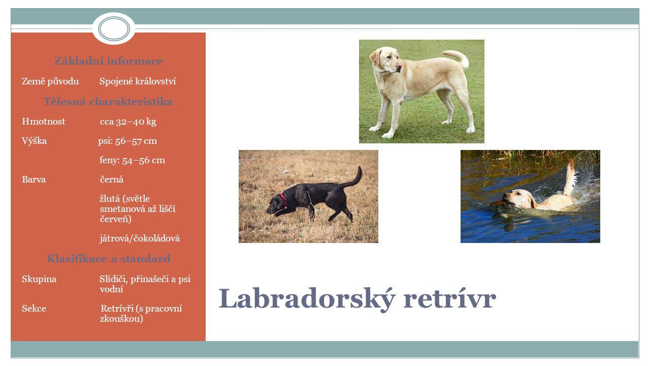Labradorský retrívr Základní informace Země původu Spojené království Tělesná charakteristika Hmotnost cca 32–40 kg Výška psi: 56–57 cm feny: 54–56 cm Barva černá žlutá (světle smetanová až liščí červeň) játrová/čokoládová Klasifikace a standard Skupina Slídiči, přinašeči a psi vodní Sekce Retrívři (s pracovní zkouškou)