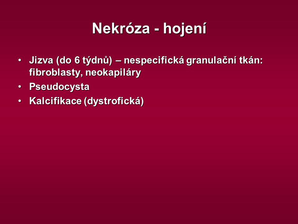 Nekróza - hojení Jizva (do 6 týdnů) – nespecifická granulační tkán: fibroblasty, neokapiláryJizva (do 6 týdnů) – nespecifická granulační tkán: fibrobl